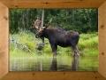 moose-frame